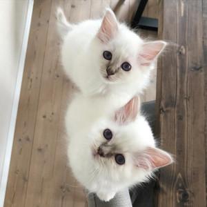 Ellie og Vincent , født 2020