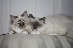 Lulu og Tino