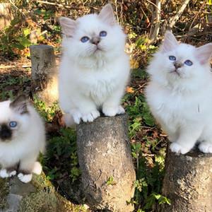Maddox, Vincent og Ellie , født 2020