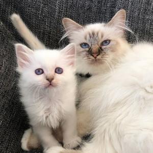 Ellie og mamma Lulu ( født 2020)