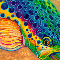 rainbow trout 2017