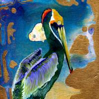 pelican II 2015