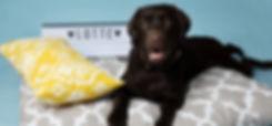 Hund Hunde Hudehalsband Hundeleine Hundebett Dog Puppy Welpe Hundespielzeug Hundeerziehung Hundetraining
