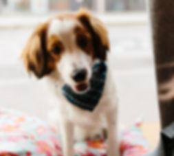 Hund Hunde Hudehalsband Hundeleine Hundebett Dog Puppy Welpe Hundespielzeug Hundeerziehung Hundetraining Herr Karl