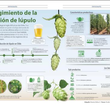 Infografía: El resurgimiento de la producción de Lúpulo