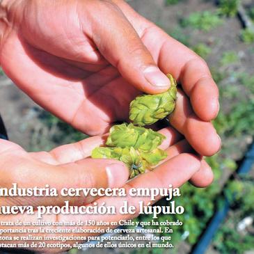 Industria cervecera empuja nueva producción de Lúpulo