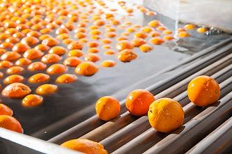 lavado de frutas 3.jpg
