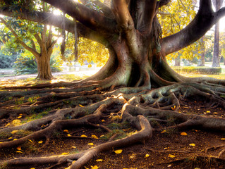 Root to Rise - 5 Ways to Practice Discernment in the Age of Disclosure