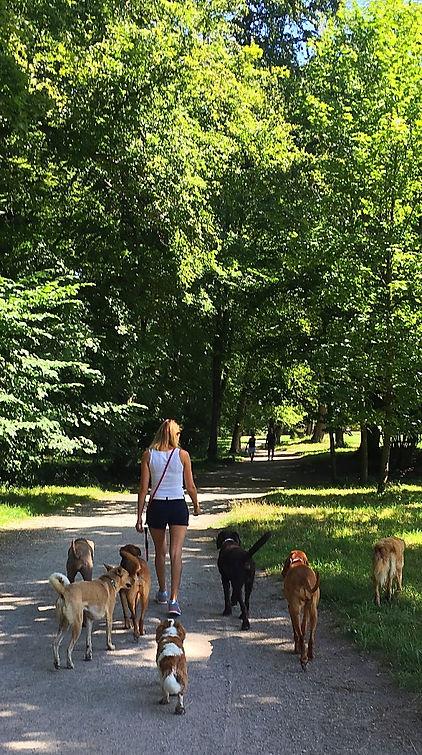 Hunde Park München Hundetraining Gassi