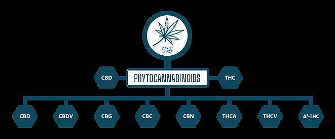 BakedBones Phytocannabinoid Chart.png