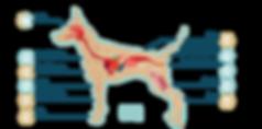 BakedBones Dog Cannabinoid Receptors.png