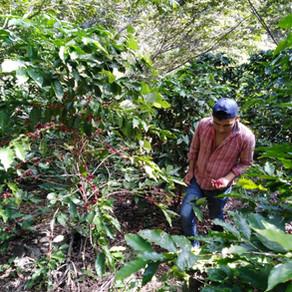 """15 años trabajando en el cultivo de café. """"Su idea va más allá de vender café"""""""
