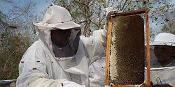 apicultor del sureste