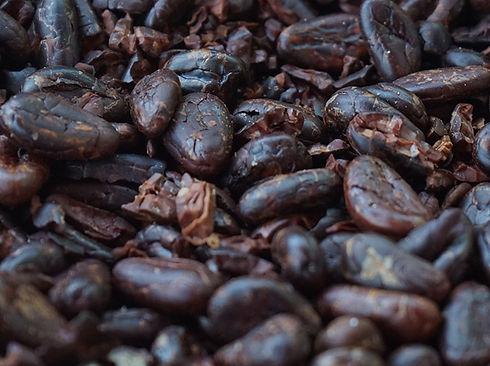 paisaje cafe cacao cultivo cacao comalcalco tabasco