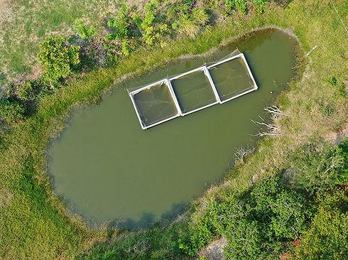 paisaje cuenca baja cultivo mojarra castarrica y pejelagarto en campeche