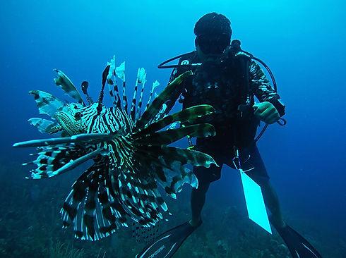 paisaje costero golfo control pez leon por buzo en banco chinchorro