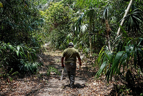 4.5_proyecto_forestal_ppd_mexico.jpg