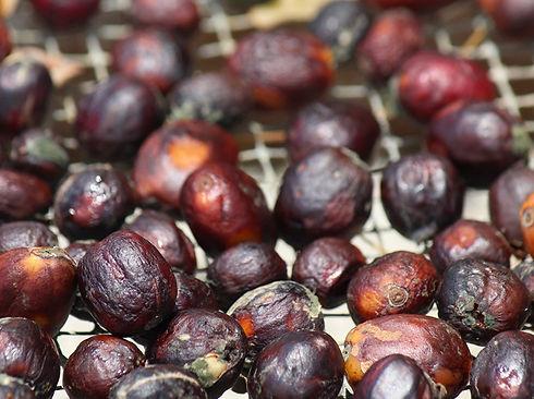 paisaje cafe cacao café indígena en chiapas