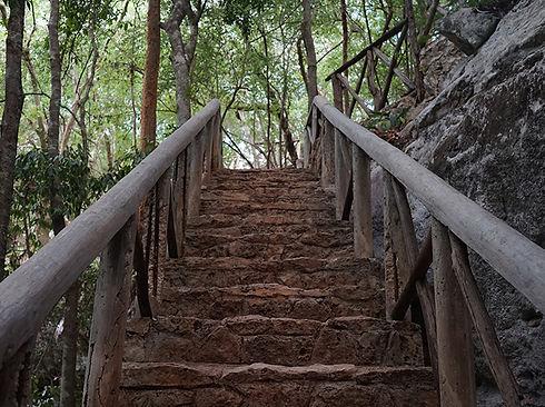 paisaje forestal milpero escaleras cenote Yokdzonot en Yucatán