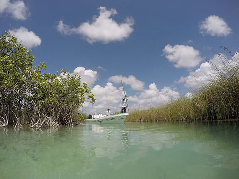 paisaje_costero_golfo_mexico_caribe_home