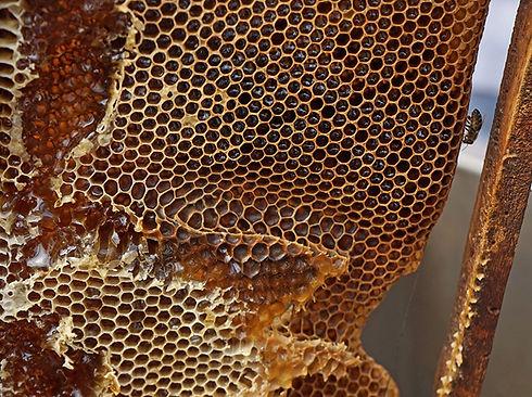panal con miel de Xjon-ha'ac de Sudzal, Yucatán