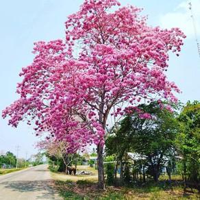 Si supiéramos que hoy se nos termina el oxígeno, yo plantaría un árbol