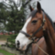 One of the farm's EAL horses
