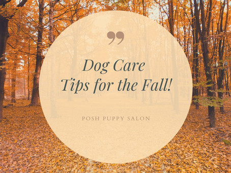 Dog Care Tips for the Fall!
