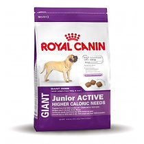 royal-canin-giant-junior-active-pour-chi