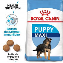 royal-canin-chien-maxi-junior.jpg