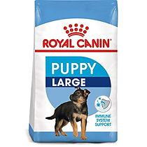 puppy large.jpg