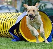 agility-chien-640x600.jpg