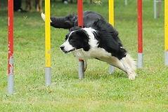 agility-chien.jpg