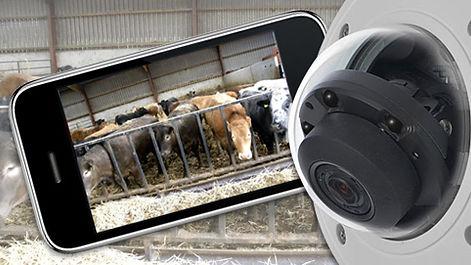 farmcam_img1.jpg