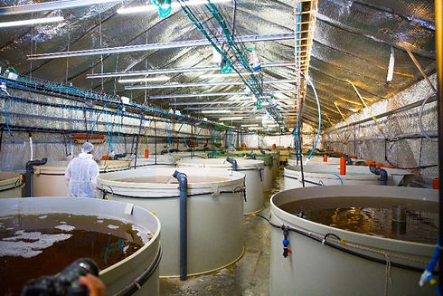 your-own-shrimp-farm-2-768x512.jpg