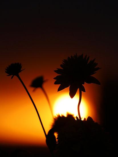 Flowers 0005