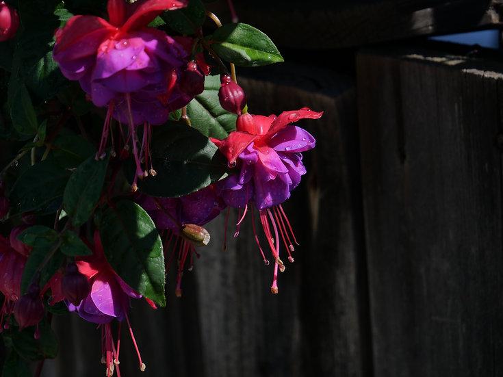 Flowers 0009