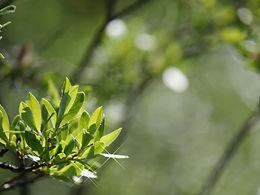 Summer Leafy Greens