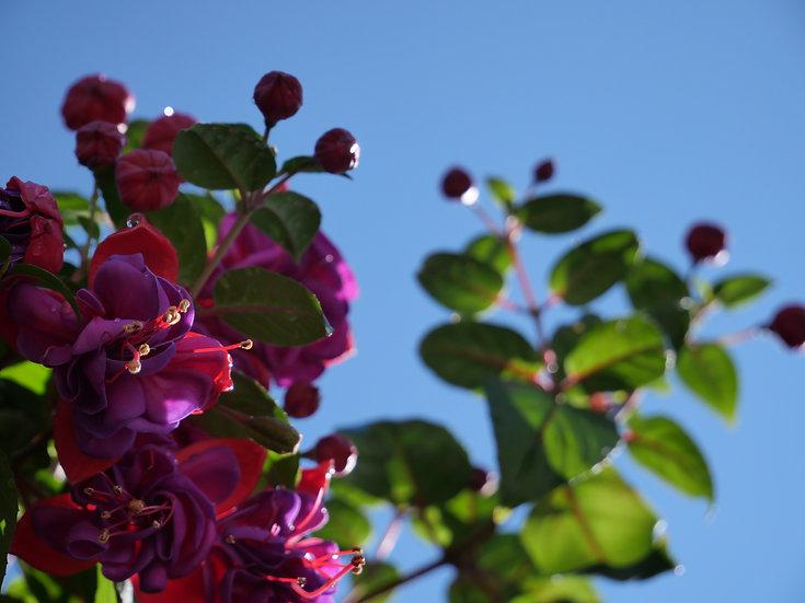 Flowers 0008
