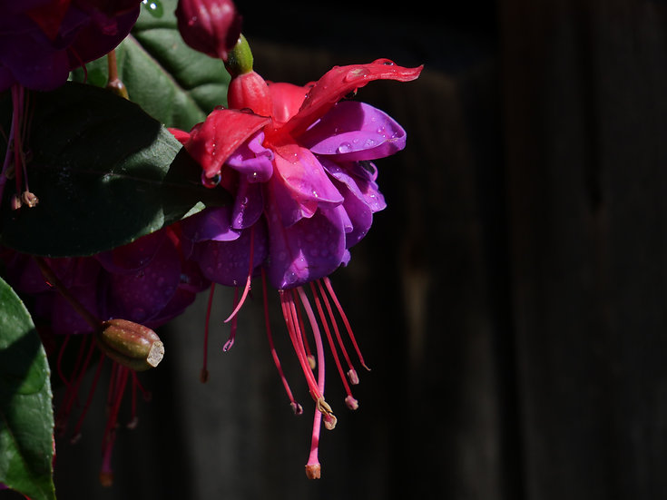 Flowers 0010