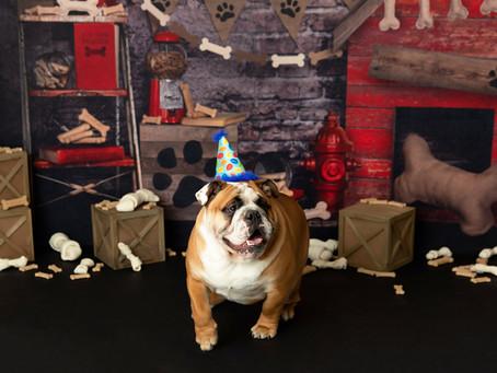 Ben the Bulldog!