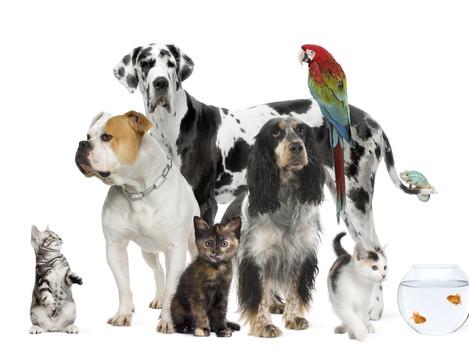 Las pólizas para mascotas ahorran hasta un 40% en la factura anual del veterinario