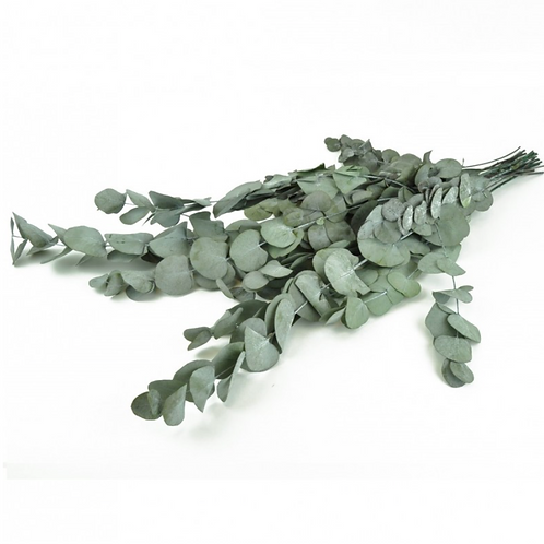 Eucalyptus Stabilisé - Vert