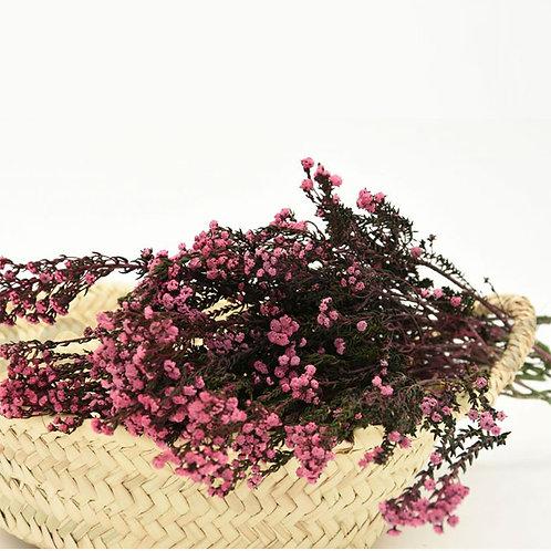 Phylica Séchée - Rose