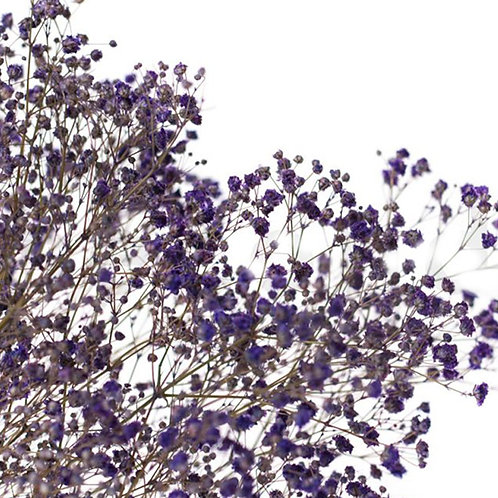 Gypsophile Séchée - Violet