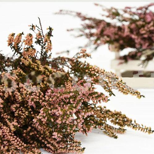 Bruyère Séchée - Rose Naturel