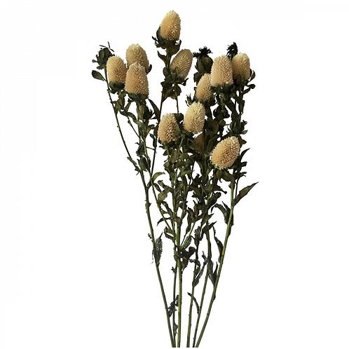 Fleur séchée de Carthamus naturel