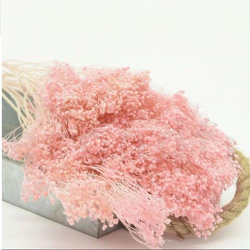 Broom bloom séché - Rose Pâle
