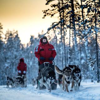 Finlande - Piste des Loups