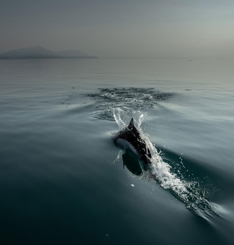 alaska3-elansetgrizzly-voyagesphoto-amar